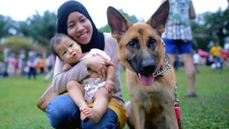Bagaimana Hukum Memelihara Anjing Dalam Islam